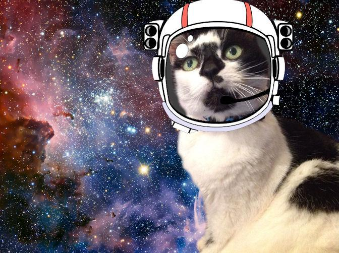 Dozey Meowtiverse Space Cat